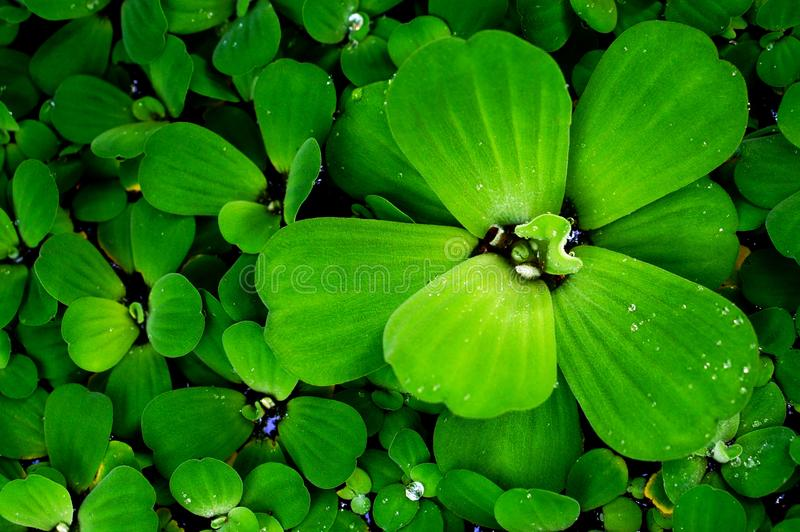 Green leaves fresh spring nature relax wallpaper background stock image