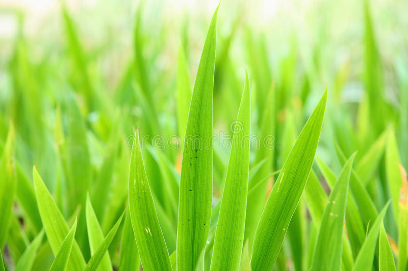 Download Green leaves backgrounds stock image. Image of texture - 10798529