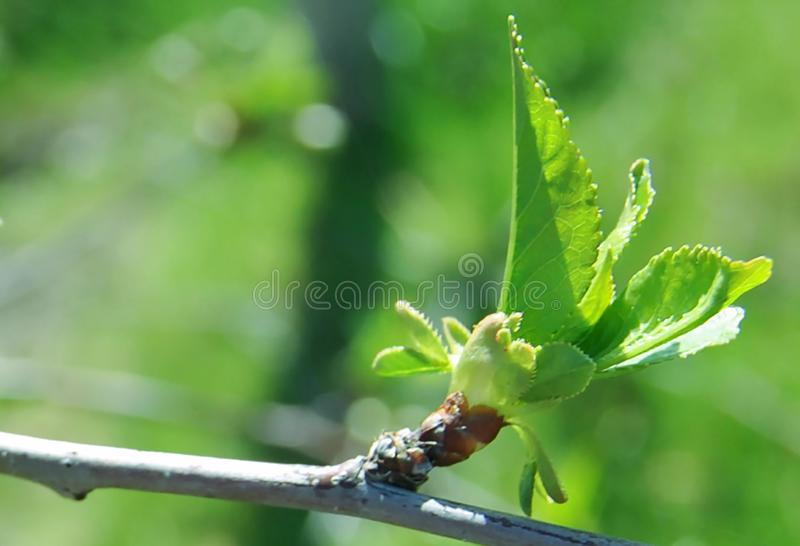 Green leaves. And plants on a neutral background.spring mood royalty free stock photography
