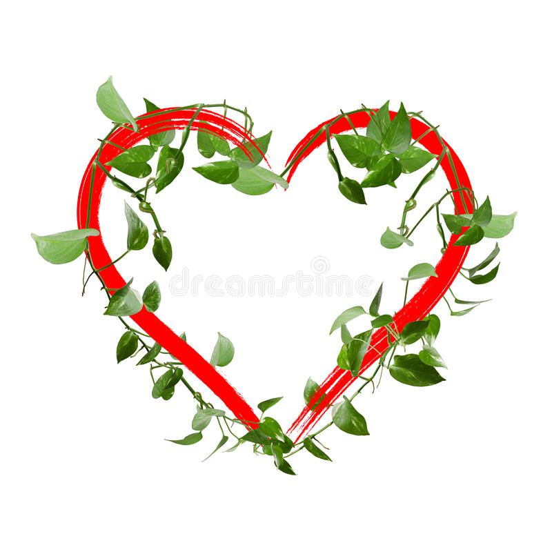 Green leaves heart isolated on white background stock photos
