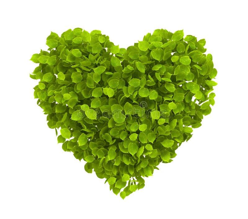 Download Green leaves heart stock illustration. Image of flora - 20547309