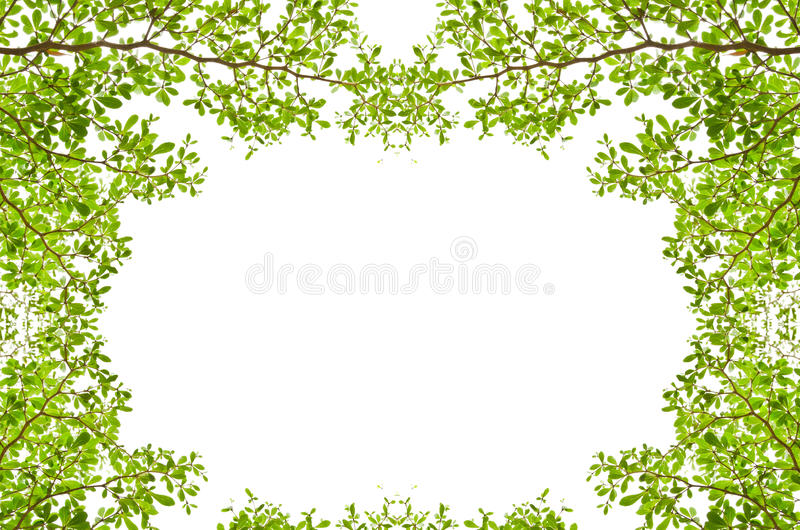 Green leaves isolated on the white. stock photo