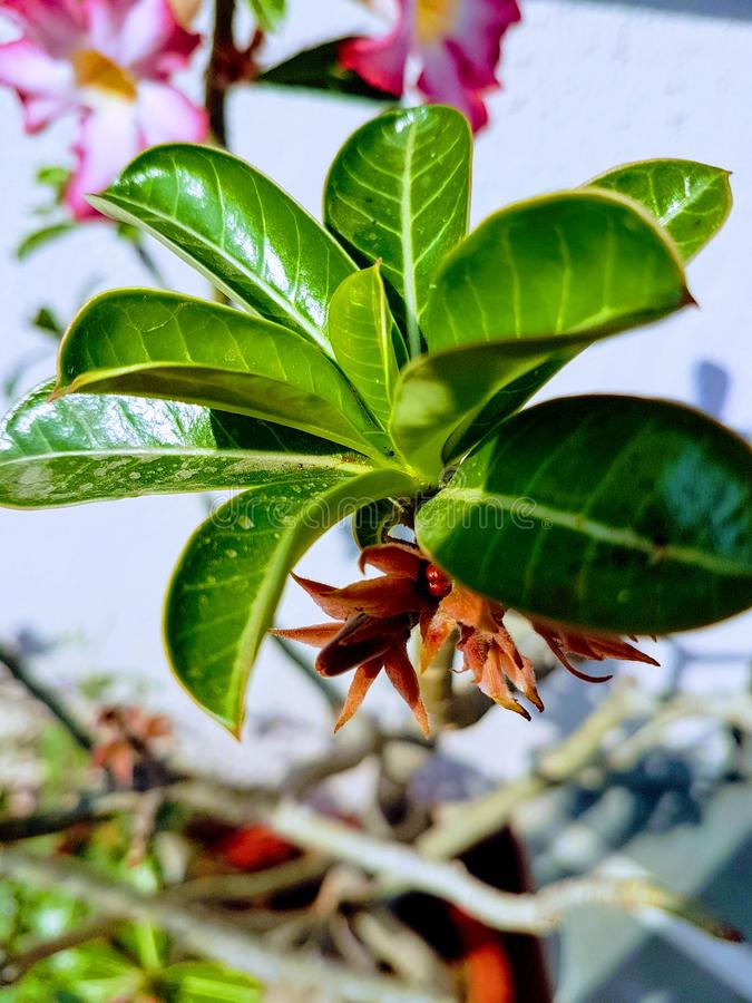 Green leaves with its flowers and fruits royalty free stock images