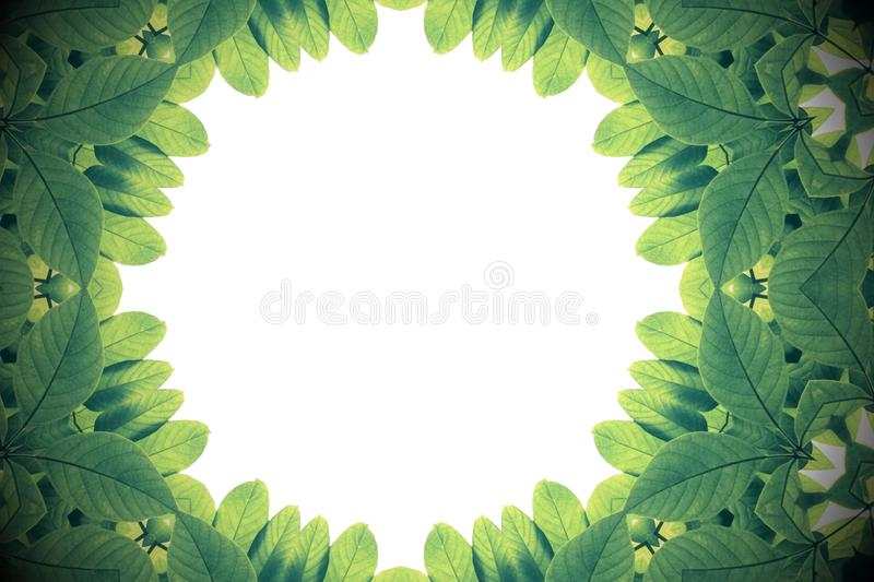 Green leaves with kaleidoscope effect, abstract color nature frame on white background. vector illustration