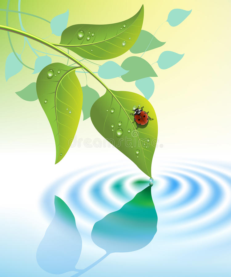 Download Green leaves with ladybug stock vector. Image of biology - 29520607
