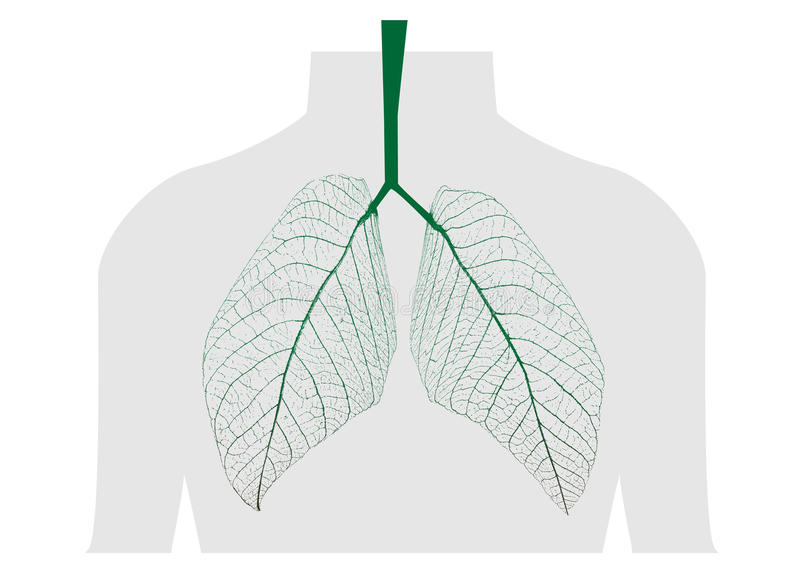 Download Green leaves of the lung stock vector. Image of green - 27439759