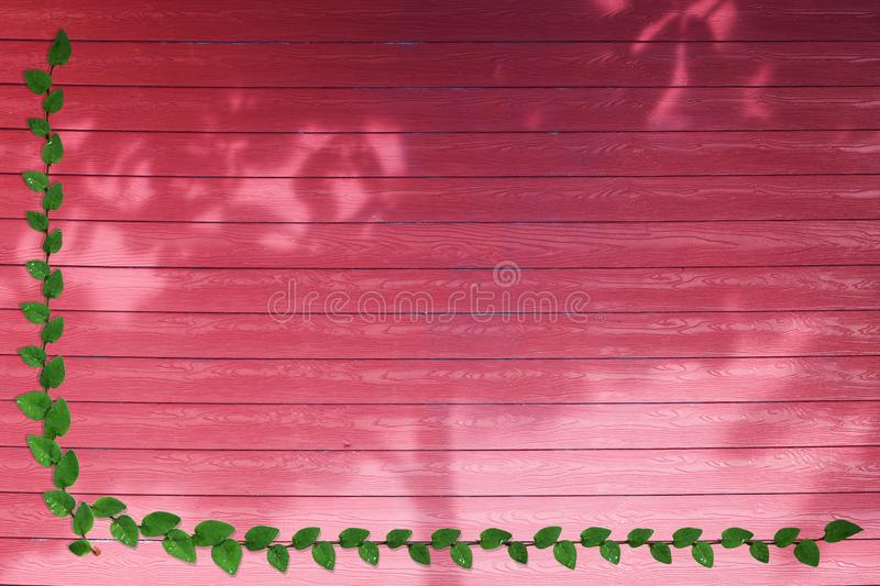 green leaves of Mexican daisy nature border and shadow tree on red wood royalty free stock photography