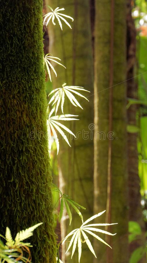 Download Green Leaves On Mossy Trunk Stock Image - Image: 32561781