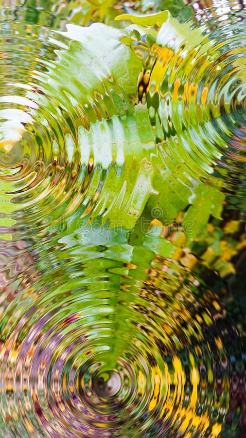 Green Leaves Nature's Abstract Art stock photos