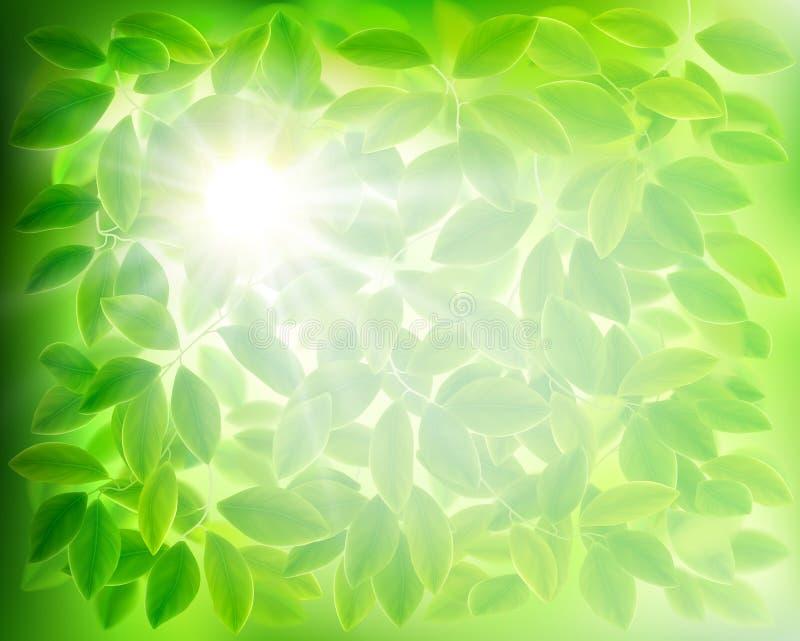 green leaves också vektor för coreldrawillustration royaltyfri illustrationer