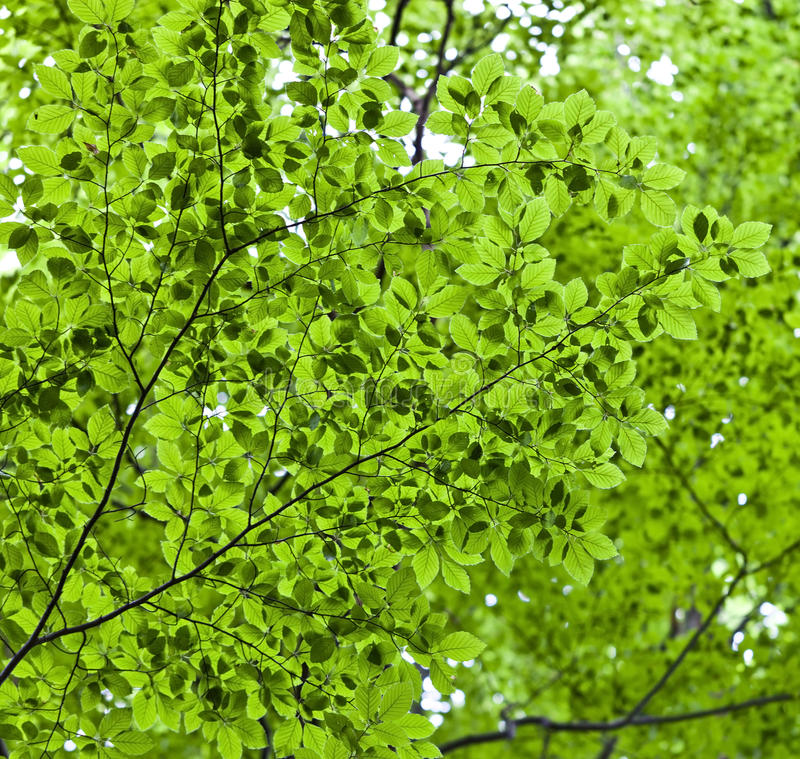 Download Green leaves stock image. Image of sunlight, outdoors - 31149091