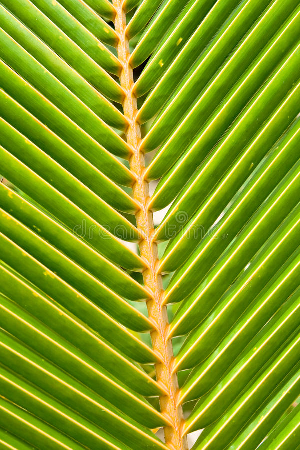 Download Green Leaves Of A Palm On Daylight Stock Image - Image of yellow, summer: 11405159