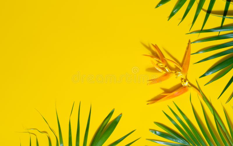 Green leaves of palm tree and heliconia flower on yellow background. Flat lay minimal nature style of tropical palm leaves on stock image
