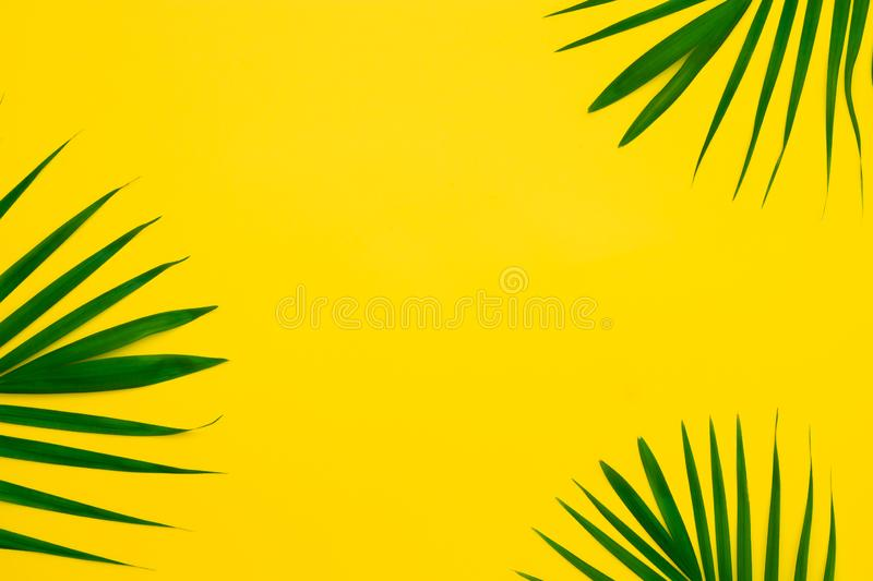 Green leaves of palm tree on yellow background. Flat lay minimal nature style of tropical palm leaves on yellow background. royalty free stock image