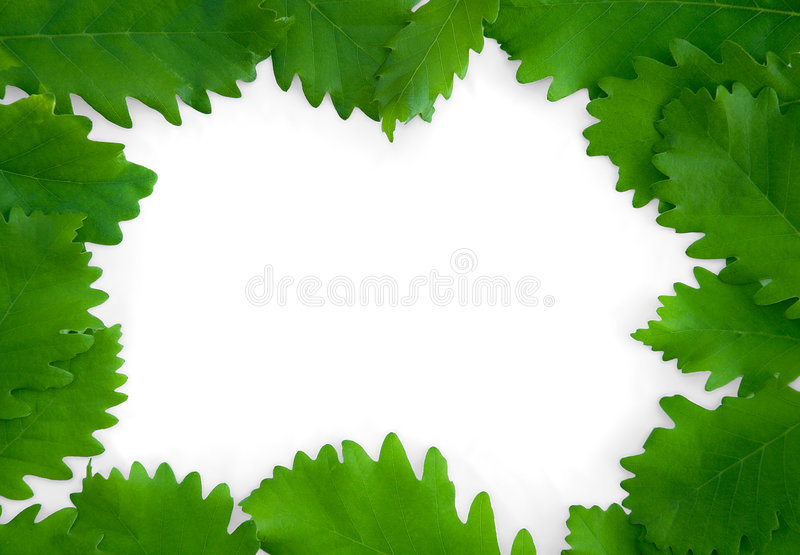 Green leaves on paper frame background isolated stock photo
