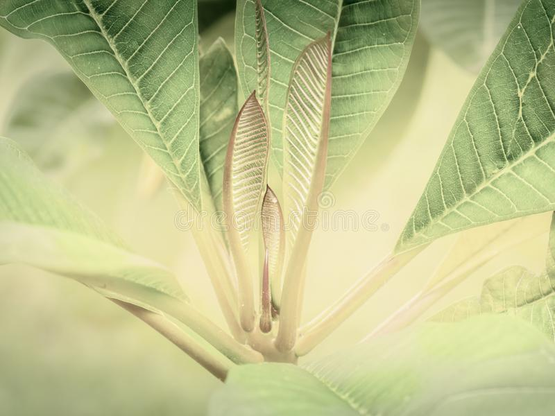 Green leaves pattern background Closeup tropical macro of nature. Concept stock photography