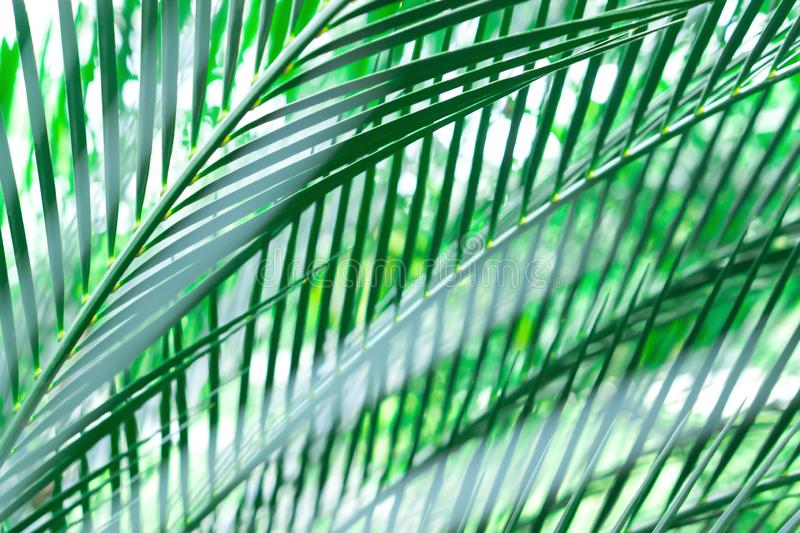Green leaves pattern soft focus abstract spring ,relax background stock images