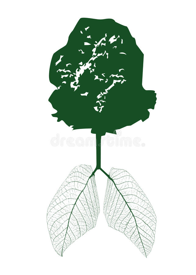 Download Green Leaves Of The Photosynthesis Lung Stock Image - Image: 27439791