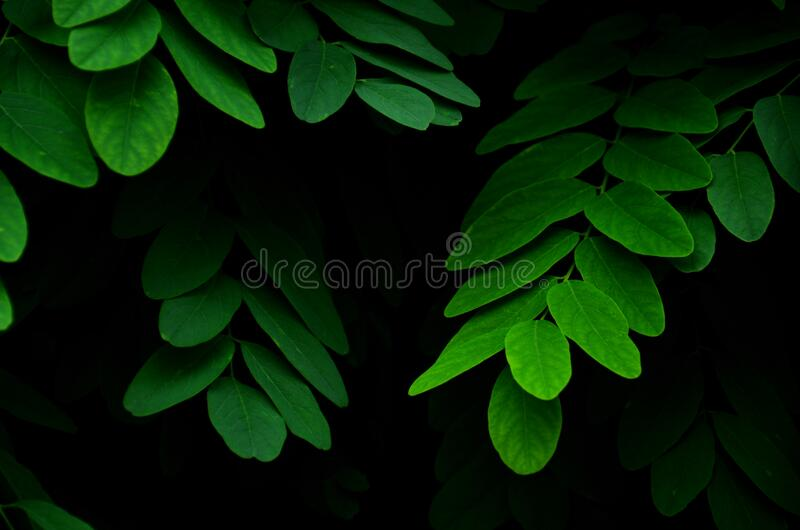 Green Leaves Plant royalty free stock photography