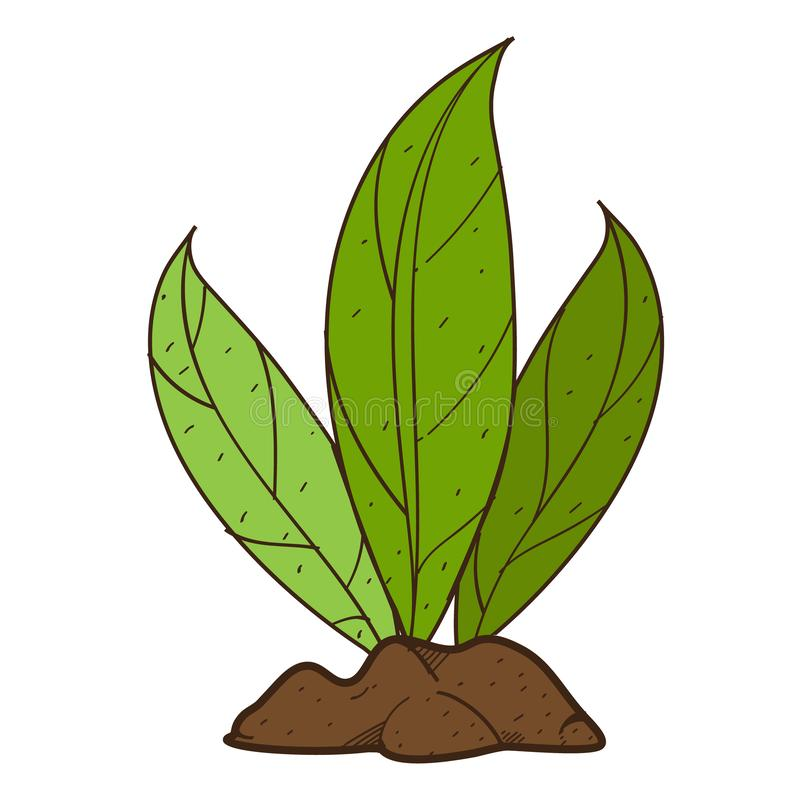 Green leaves, plant on the ground shrubs. Color illustration on farming, growing of plants.  stock illustration
