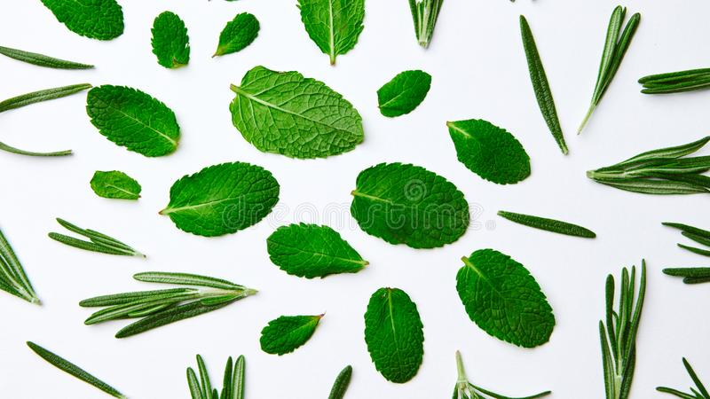 Green pattern from mint leaves and rosemary on a white background. Natural background. Flat lay. Green leaves of rosemary and mint on a white background royalty free stock photos