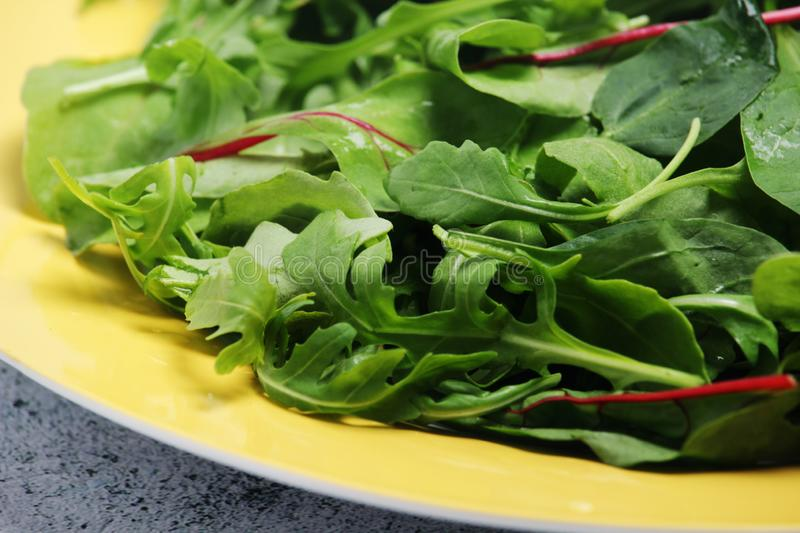 A plate with green salad. Green leaves salad mix on a table ready for lunch royalty free stock photo