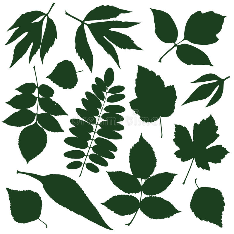 Green leaves. Set silhouettes green decorative leaves. vector illustration vector illustration