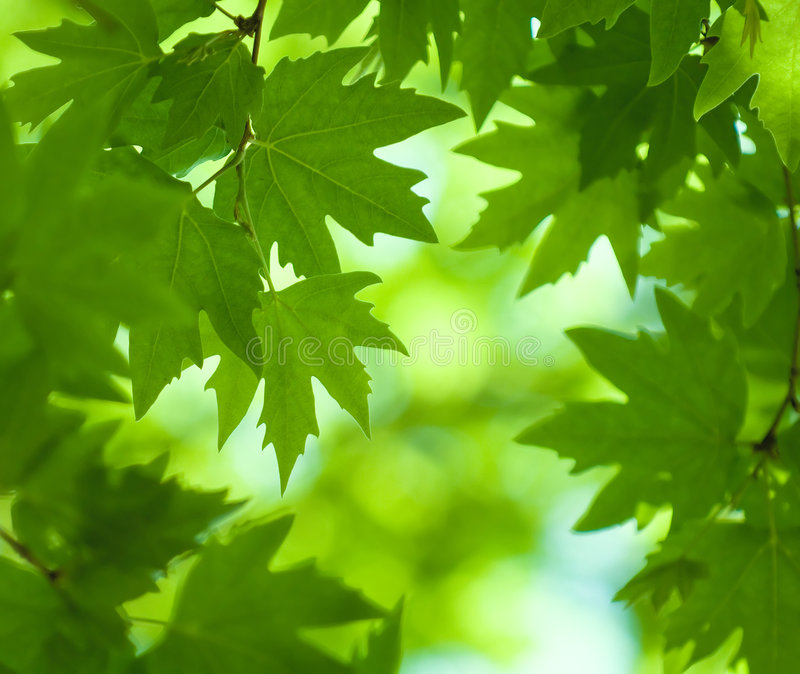 Download Green Leaves, Shallow Focus Stock Image - Image: 5045341