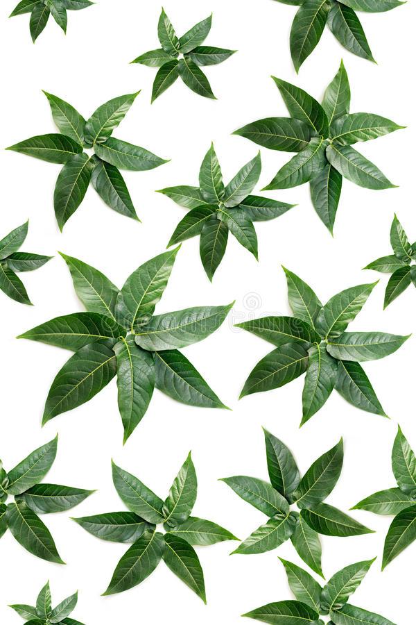 Download Green Leaves Shapes In A Seamless Pattern Stock Image - Image: 20654281