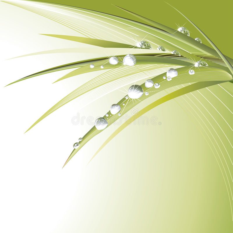 Download Green Leaves With Shiny Drops Stock Photos - Image: 4975453