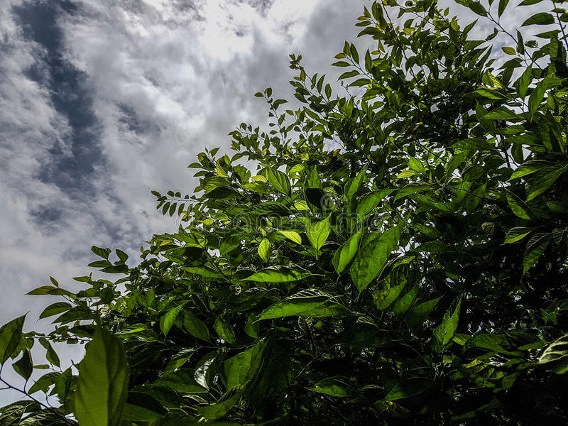 Green leaves and Sky royalty free stock photography