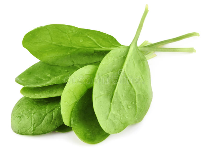 Green leaves of spinach royalty free stock image