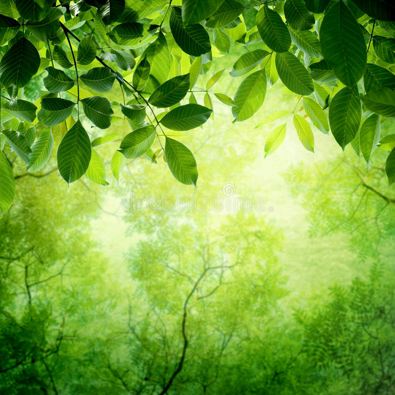 Green leaves with sun stock image
