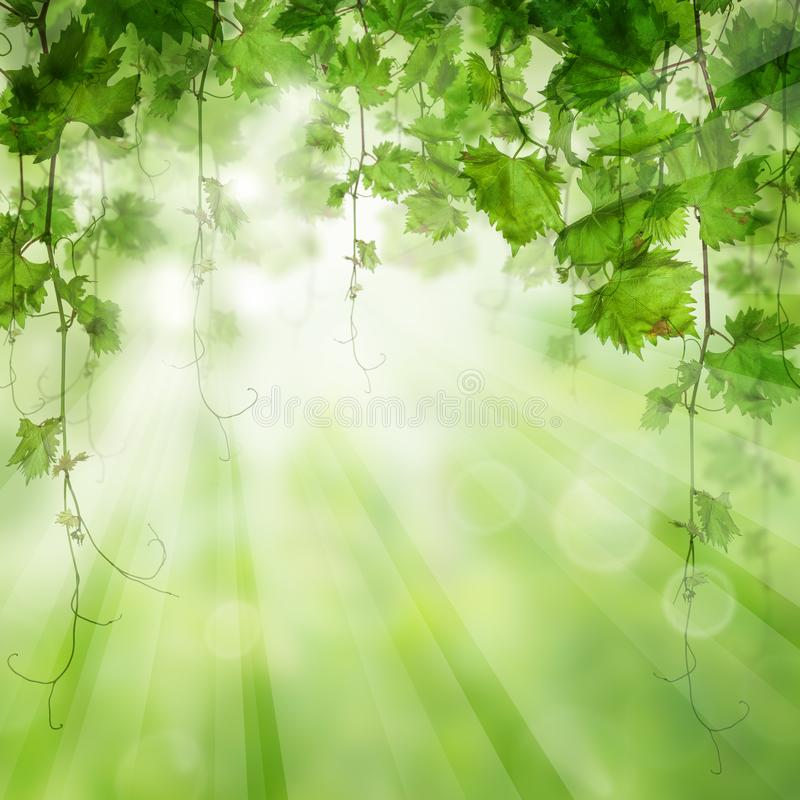 Green leaves with sunlight. Nature bio concept.  vector illustration