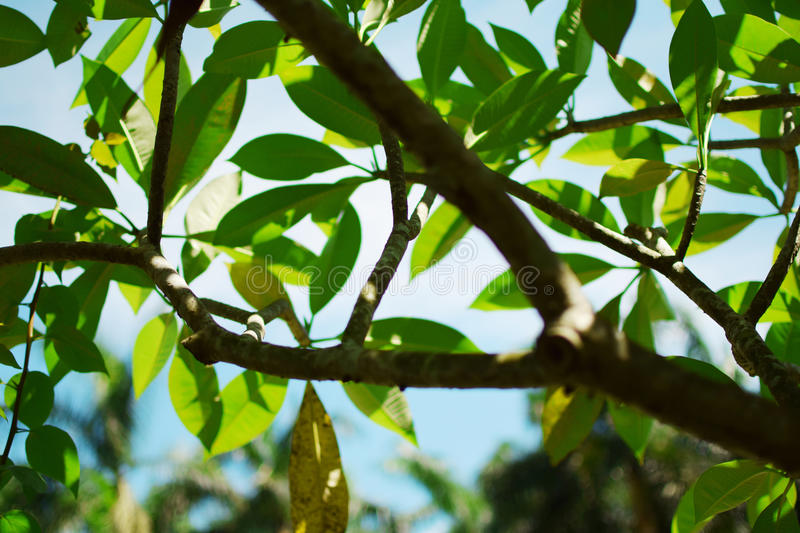 Green leaves and sunshine royalty free stock photo