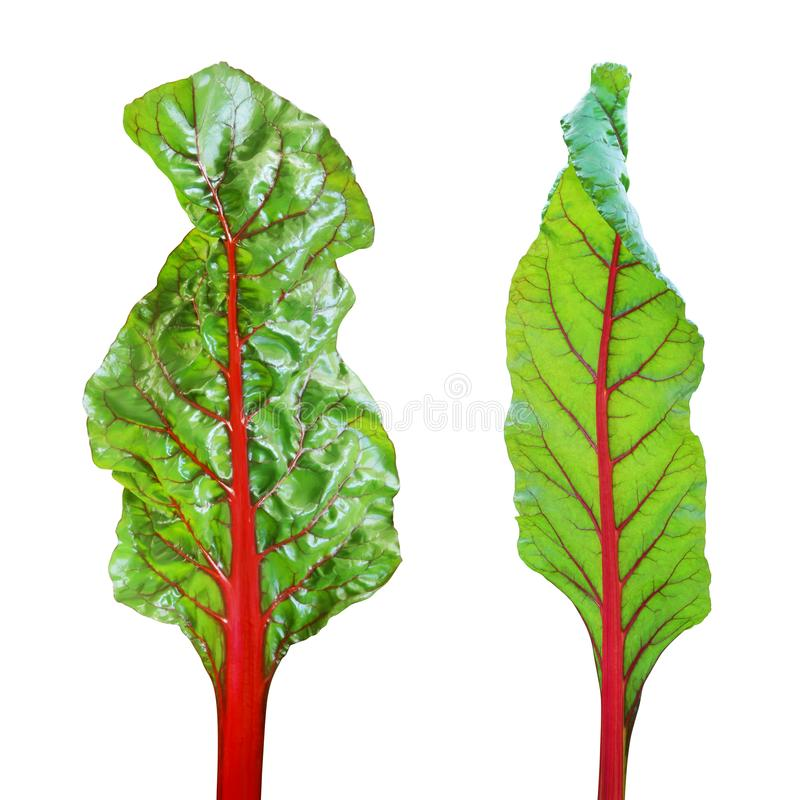 Green Leaves of  Swiss Chard Vegetable Isolated on White Background royalty free stock images