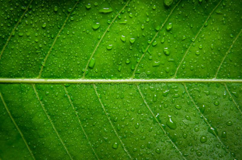 Green Leaves Texture And Drop Of Water Wallpaper By Detail