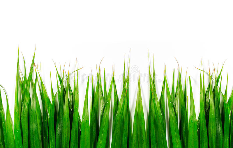 Green leaves isolated background royalty free stock photos