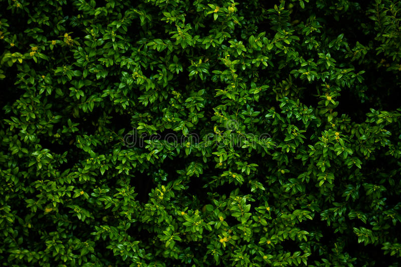 Green leaves top view nature background stock photos