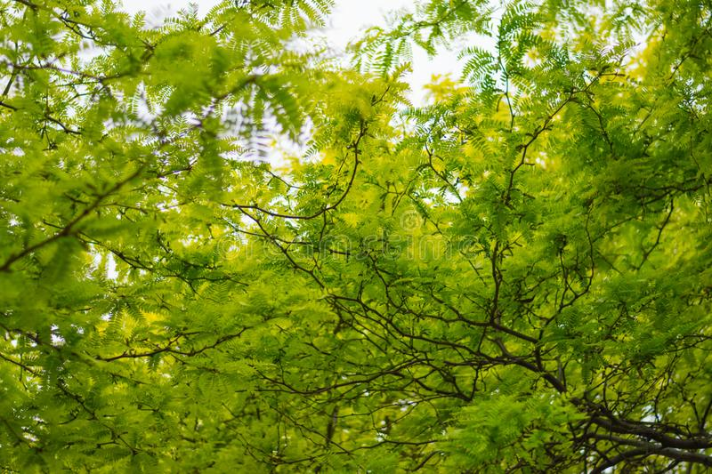 Colourful trees in a park royalty free stock photos