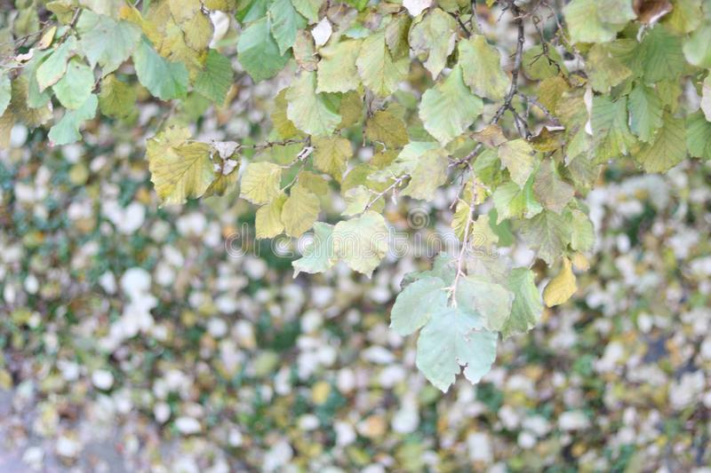 Green tree leaves during autumn. Green leaves of a tree shot from above. Dry leaves on the floor. Wood landscape during autumn royalty free illustration