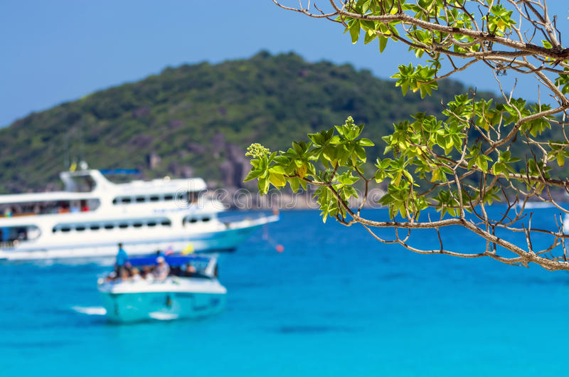 Green leaves from the trees under a bright blue sky with sea. And Yacht boats background stock photo