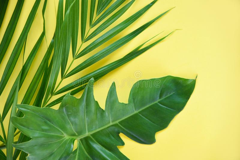Green leaves tropical plant jungle with palm Philodendron leaf on yellow background stock image
