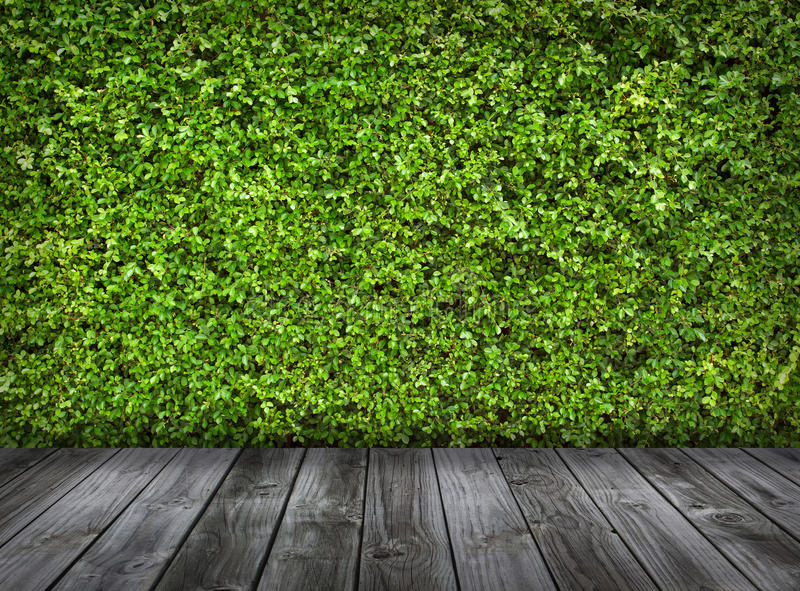 Green leaves wall and old wood floor stock illustration