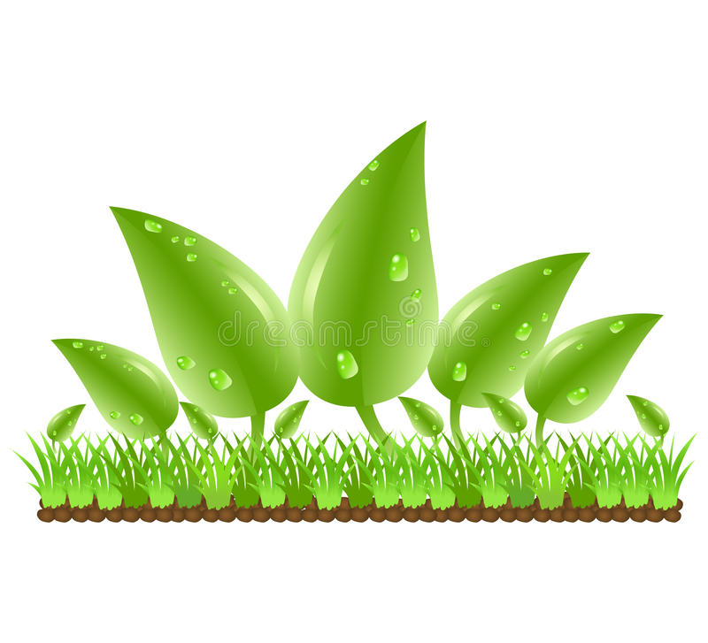 Green leaves with water drops stock illustration