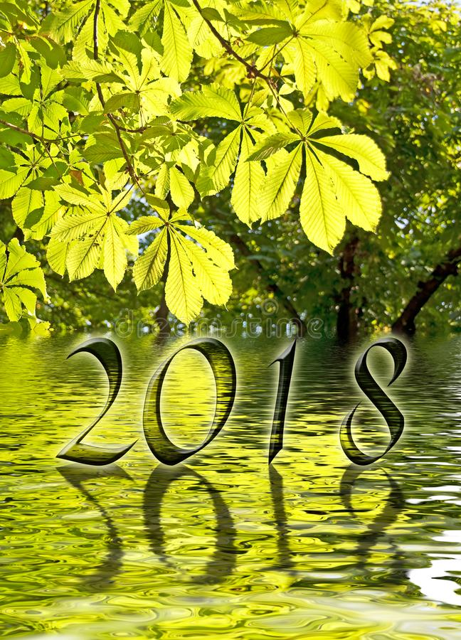 2018, Green leaves and water reflections stock photo