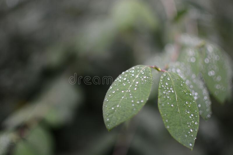 Green Leaves With Waterdrops Free Public Domain Cc0 Image