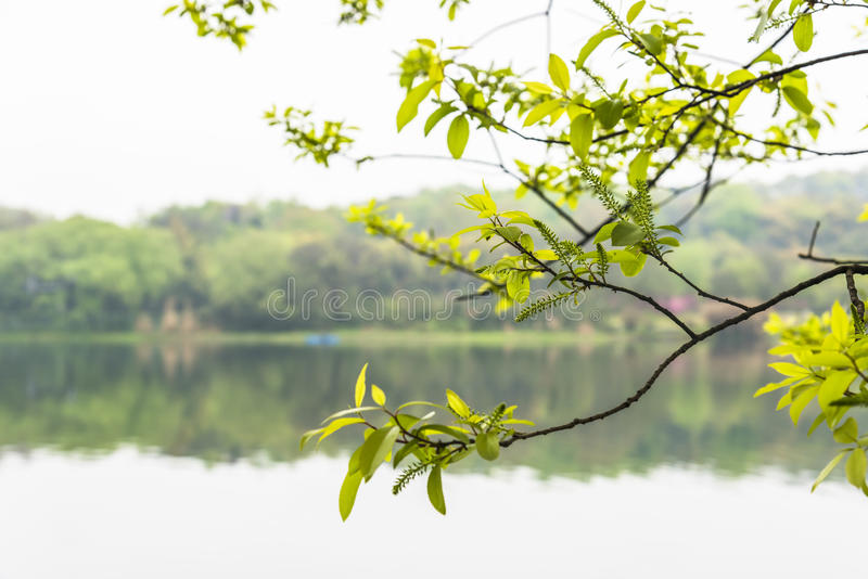 Green leaves and west internal lake stock photos