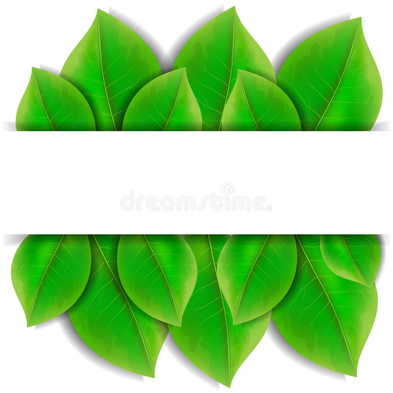 Download Green leaves stock vector. Illustration of banner, development - 36949345