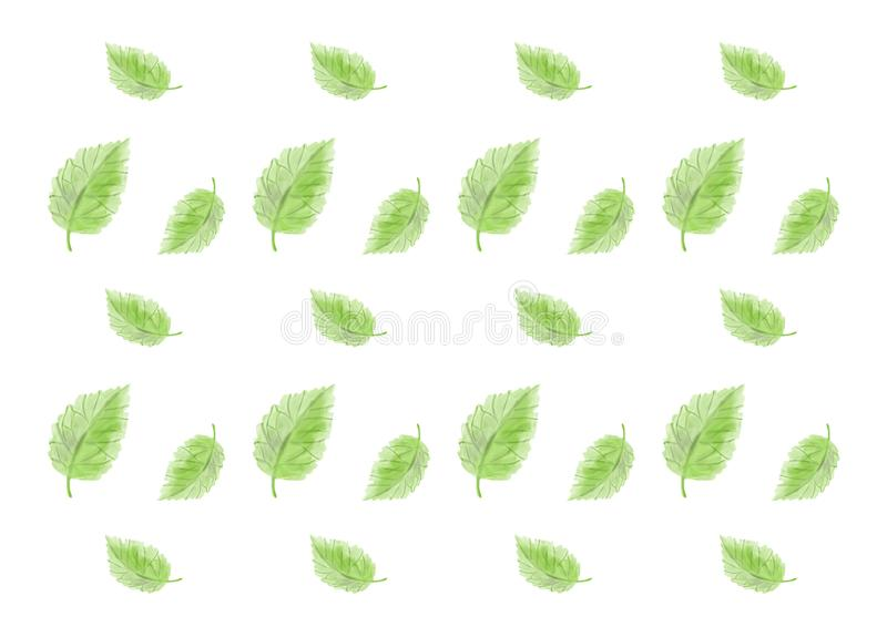 Green leaves on a white background. royalty free stock image